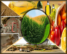 Potential role of agriculture and agro-industry :- Pakissan.com