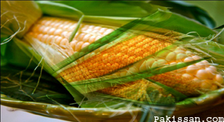 Farmers demand approval of genetically modified corn :-Pakissan.com