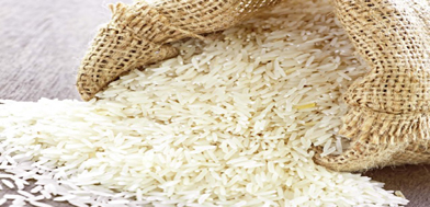 Hybrid maize seed to be launched today :-Pakissan.com