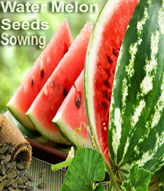 Import, supply of water-melon & melon seeds for sowing: sales tax exemption available under Sixth Schedule :Pakissan.com