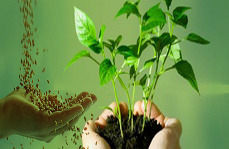 Best ways to grow plants from seed:-Pakissan.com