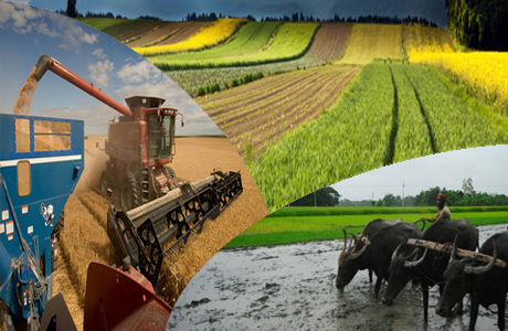 Pakistan Is An Essential Element For Agriculture